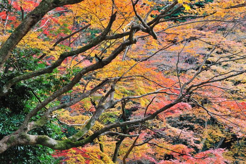 f:id:shakuyamame:20111204153454j:image