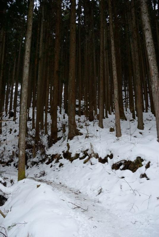 f:id:shakuyamame:20120115160530j:image