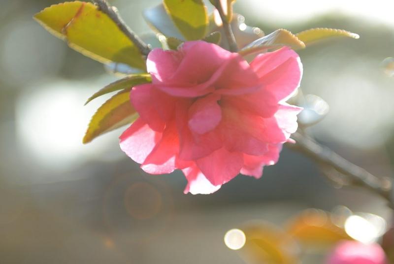 f:id:shakuyamame:20120311074445j:image