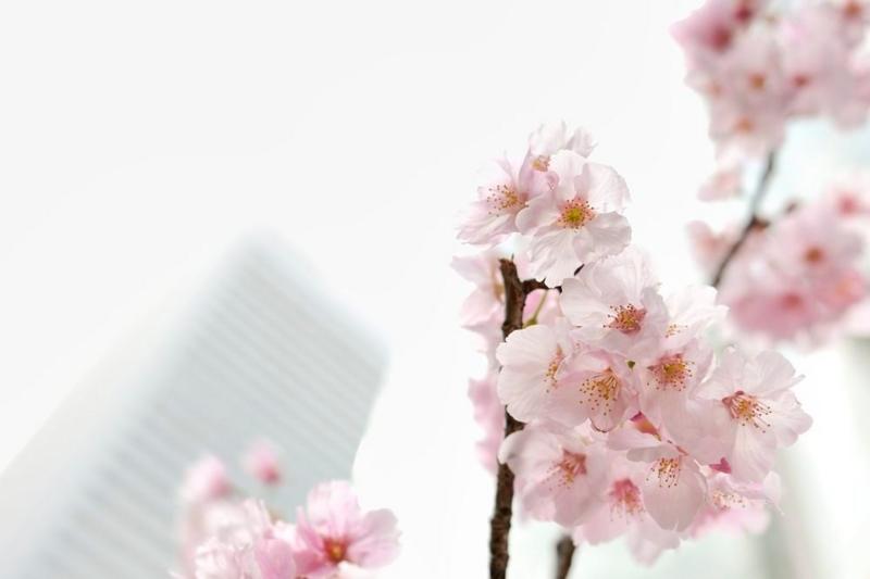 f:id:shakuyamame:20120325105850j:image
