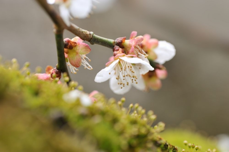 f:id:shakuyamame:20120401142726j:image
