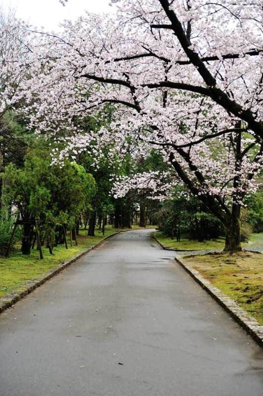 f:id:shakuyamame:20120414101007j:image