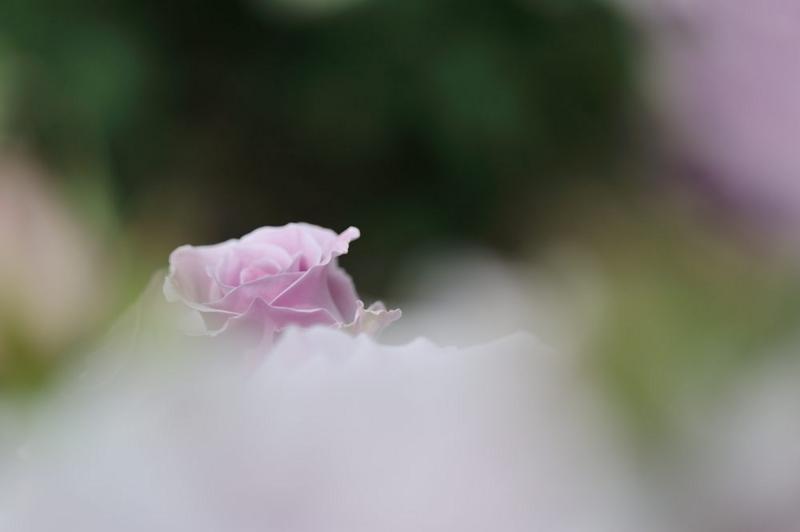 f:id:shakuyamame:20120519143013j:image