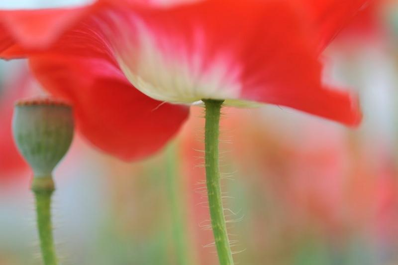 f:id:shakuyamame:20120603140922j:image