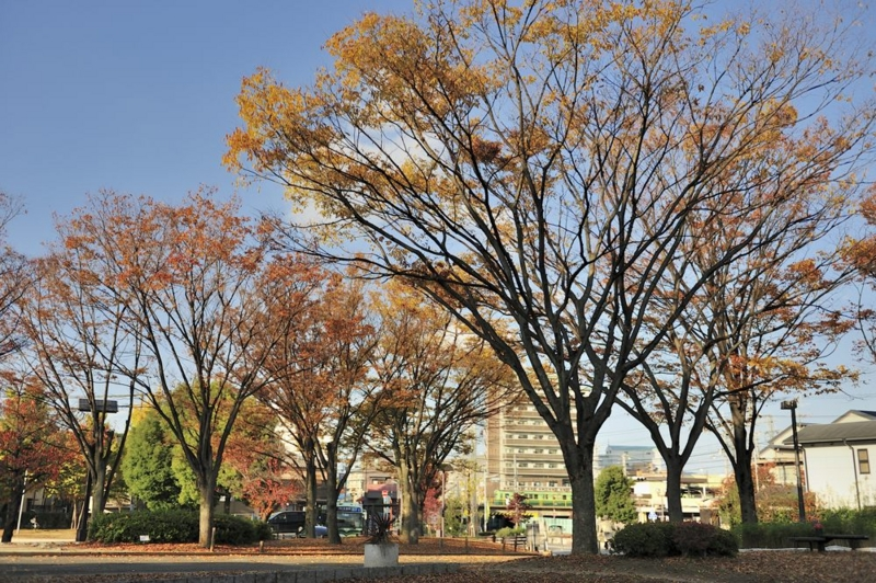 f:id:shakuyamame:20121119150950j:image