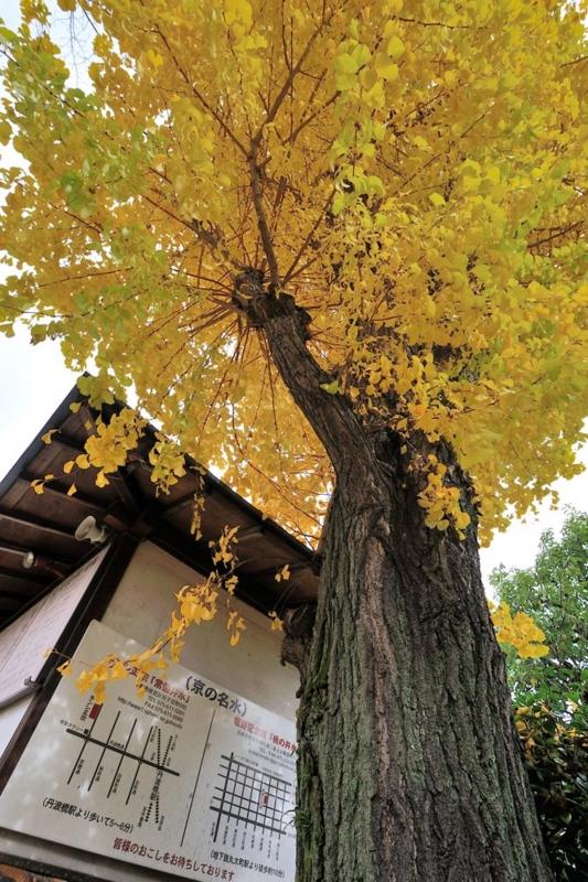 f:id:shakuyamame:20121124112520j:image