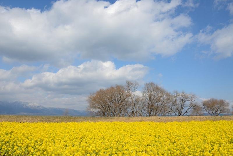 f:id:shakuyamame:20130223131100j:image