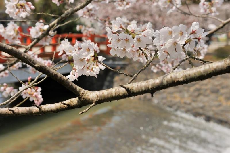 f:id:shakuyamame:20130330123325j:image