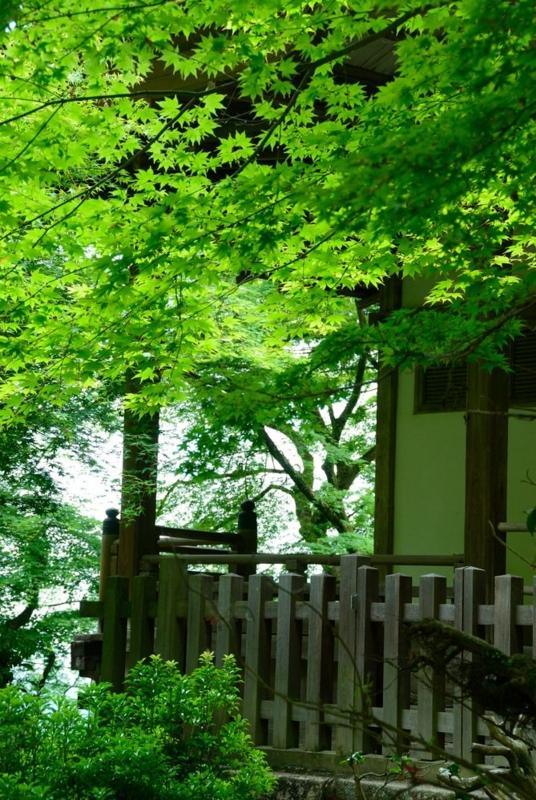 f:id:shakuyamame:20130602150838j:image
