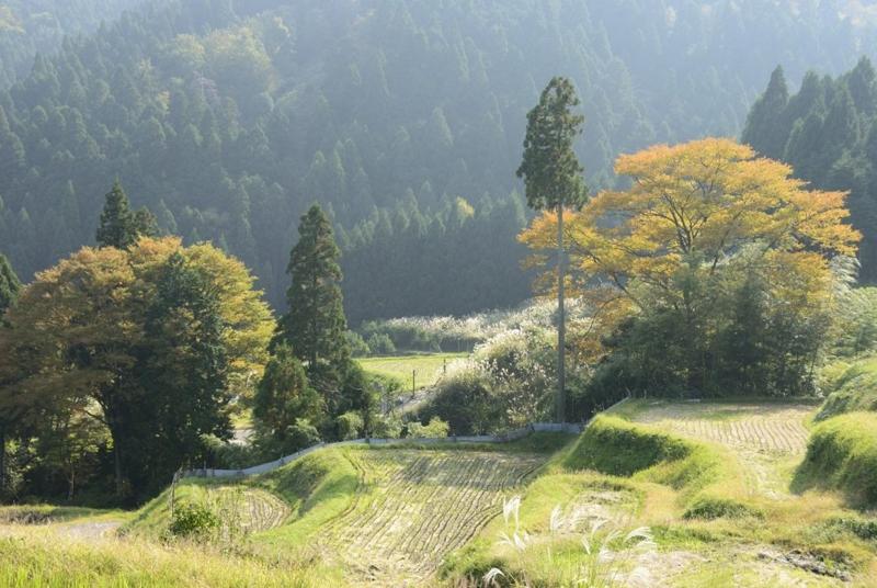 f:id:shakuyamame:20131102131230j:image