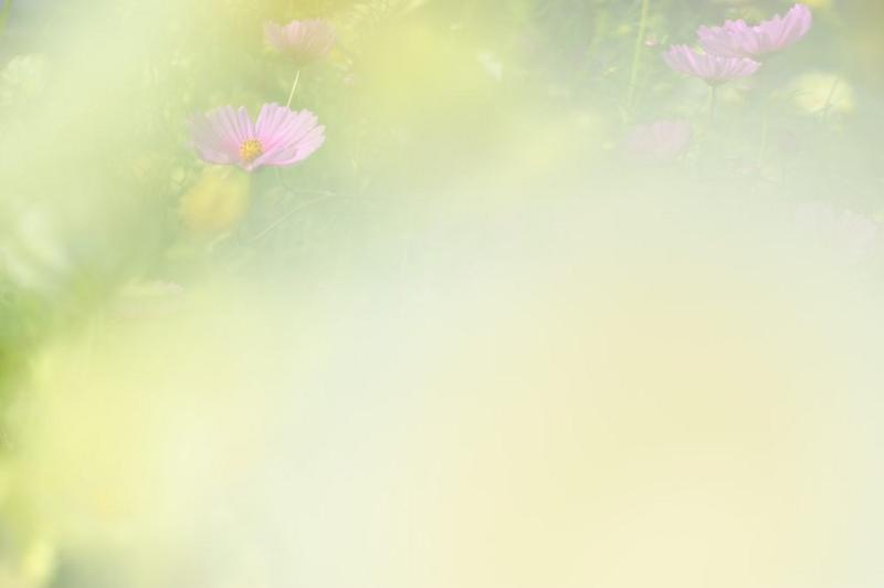 f:id:shakuyamame:20141010105128j:image