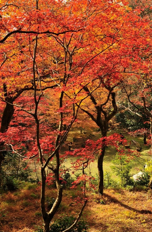 f:id:shakuyamame:20141124114406j:image