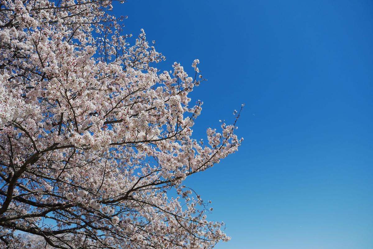 f:id:shamo-ji:20190413181508j:plain