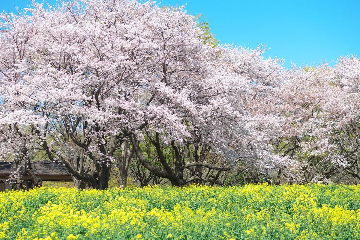 f:id:shamo-ji:20190413181526j:plain
