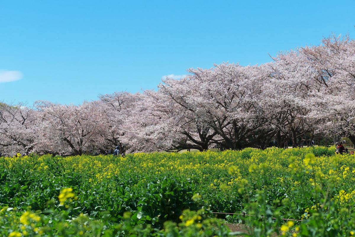 f:id:shamo-ji:20190413181627j:plain