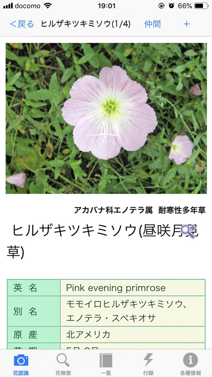 f:id:shamo-ji:20190601064106j:plain