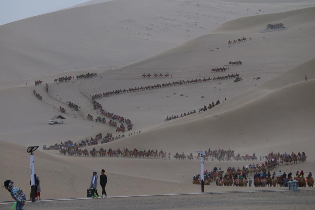 ラクダの渋滞