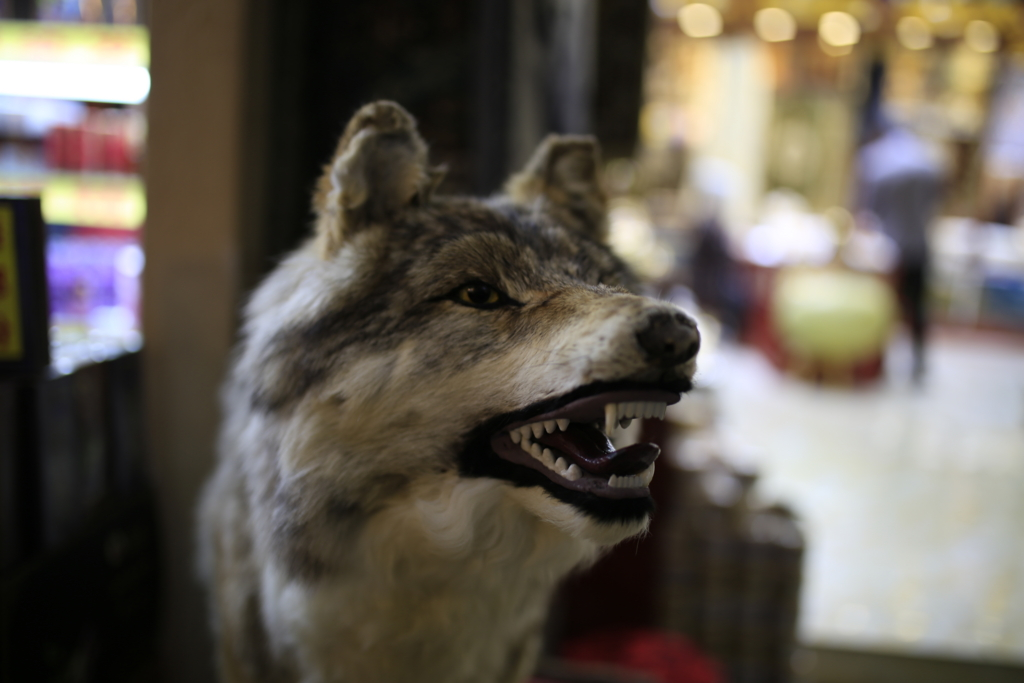 新疆国際大バザール(新疆国际大巴扎)狼