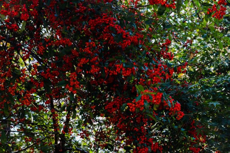 栖霞山紅葉谷の紅葉