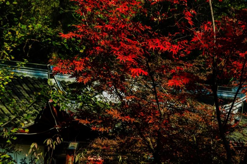 栖霞山栖霞寺の紅葉