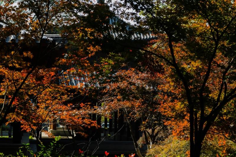 栖霞山の紅葉