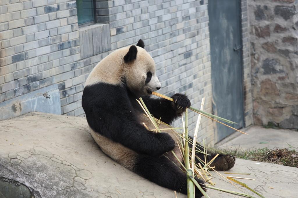 臥竜自然保護区パンダ保護区