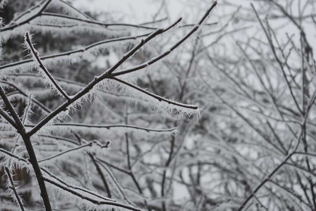 峨眉山雪の結晶