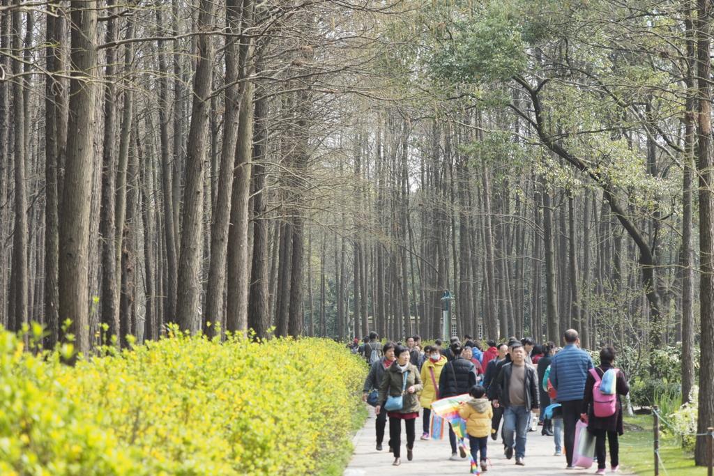 上海共青森林公園