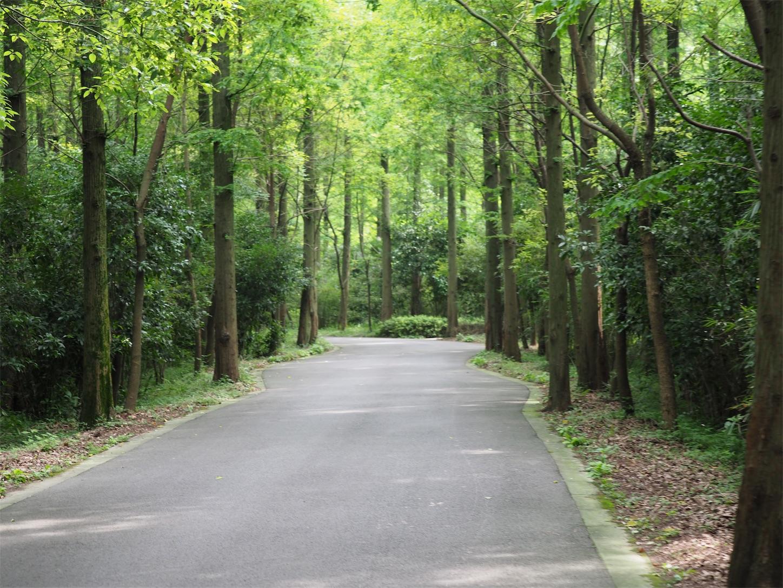 東平国家森林公園・林道1