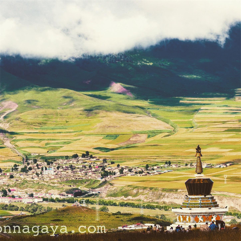 祁連-卓尔山塔と麦畑 雲海