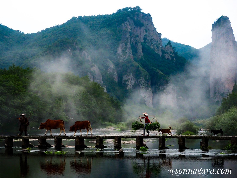朱潭山景点(牛、犬)