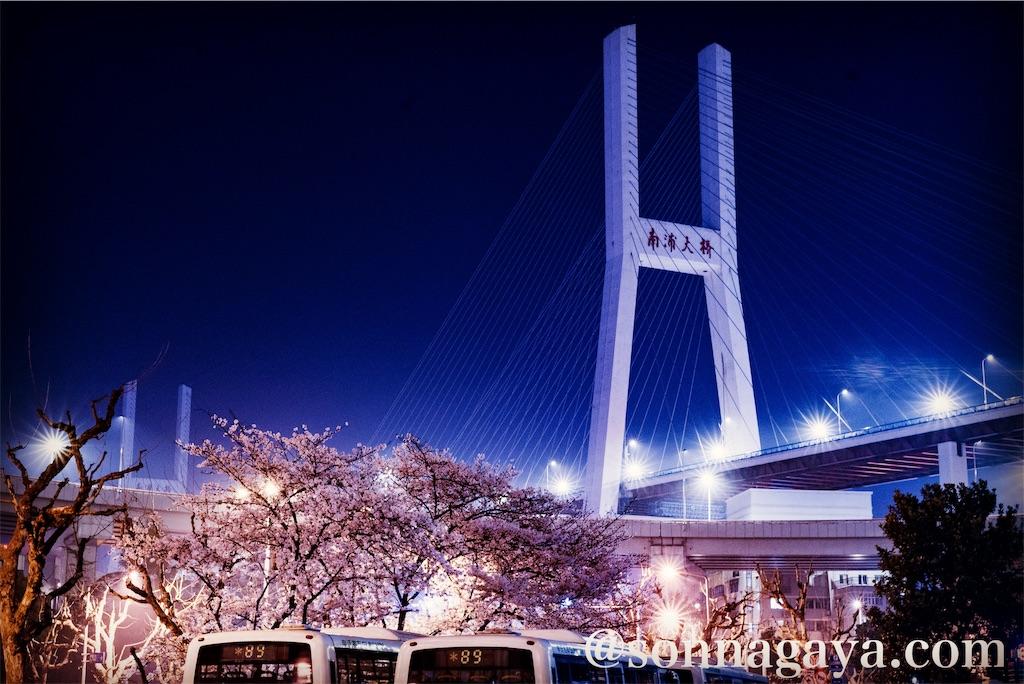 上海南浦大橋の桜
