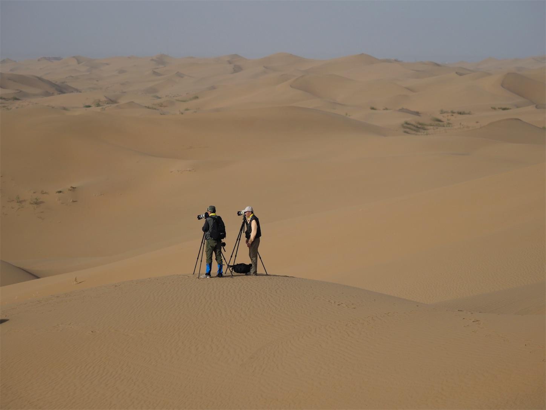 オルドス,クブチ砂漠,仲良し