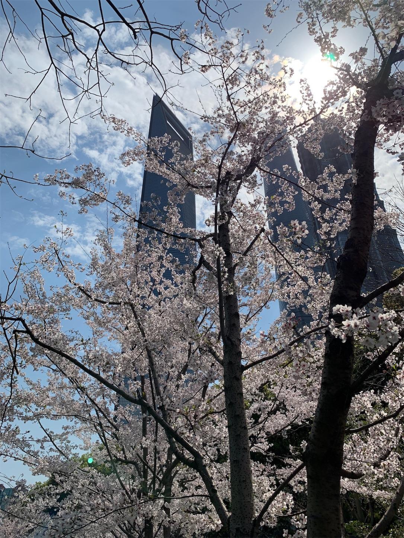 上海の桜・東昌路駅