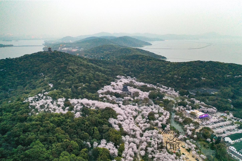 無錫鼋頭渚,桜花谷