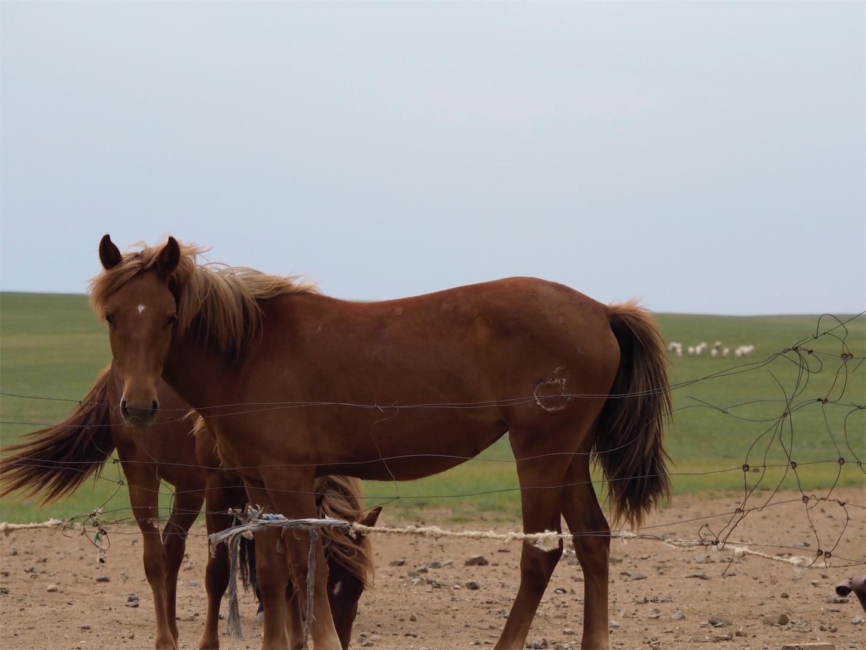 草原の風景,馬