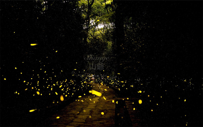 南京霊谷寺の蛍