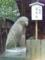 大豊神社 狛トビ