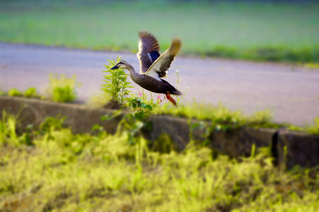 f:id:shasin130:20170526225835j:plain