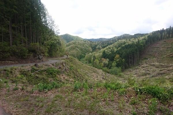 田舎の山道