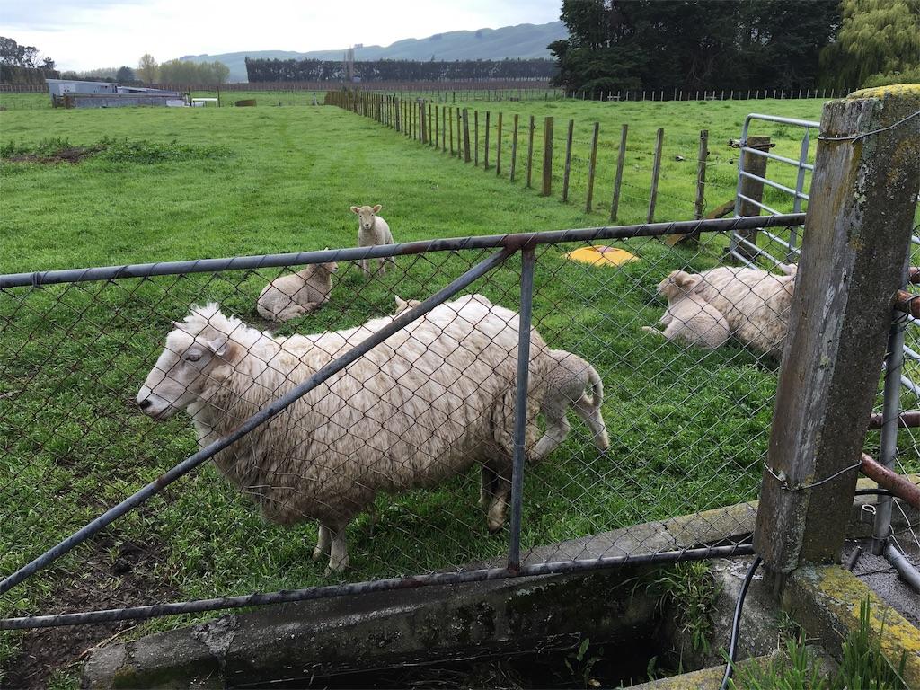 f:id:sheep126:20161007074332j:image