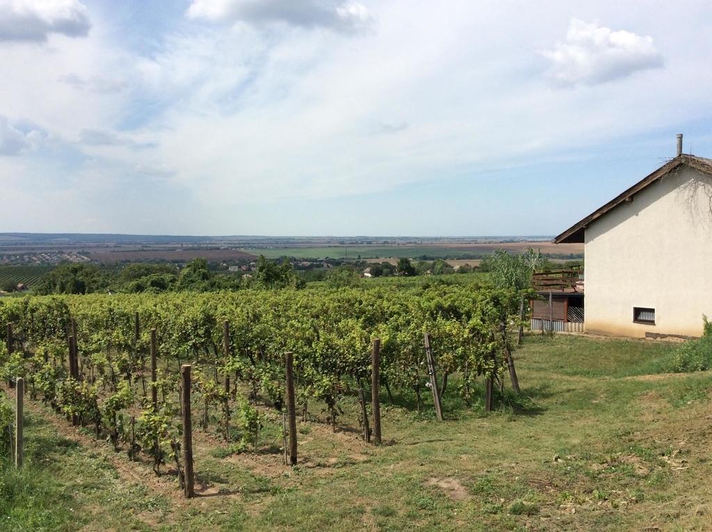 f:id:sheldlake-wine:20181029200424j:plain
