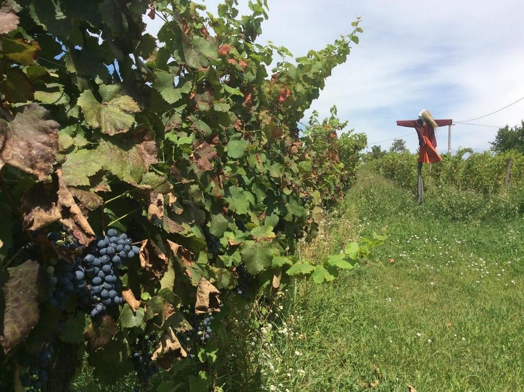 f:id:sheldlake-wine:20181029200459j:plain