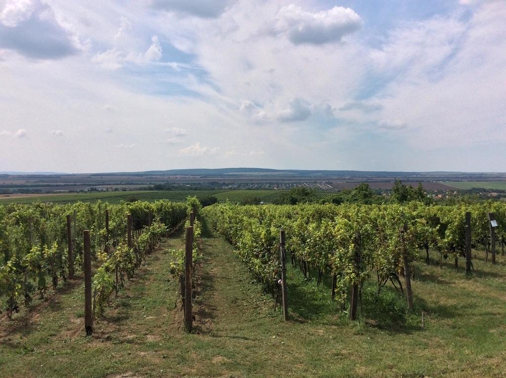 f:id:sheldlake-wine:20181029200600j:plain