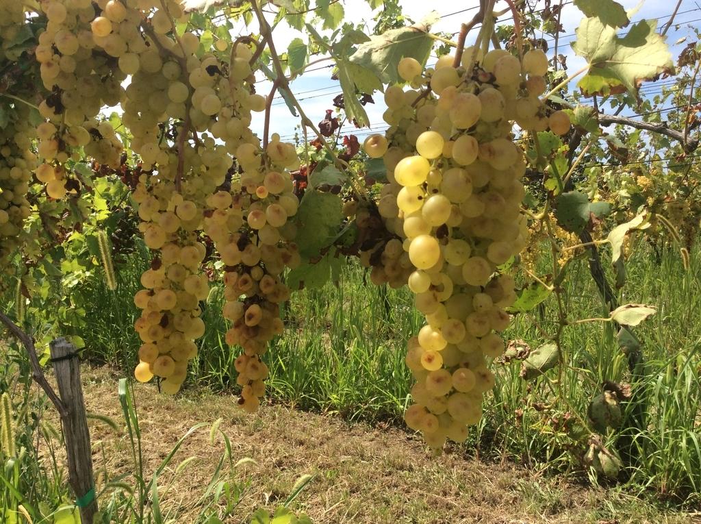 f:id:sheldlake-wine:20181102135551j:plain