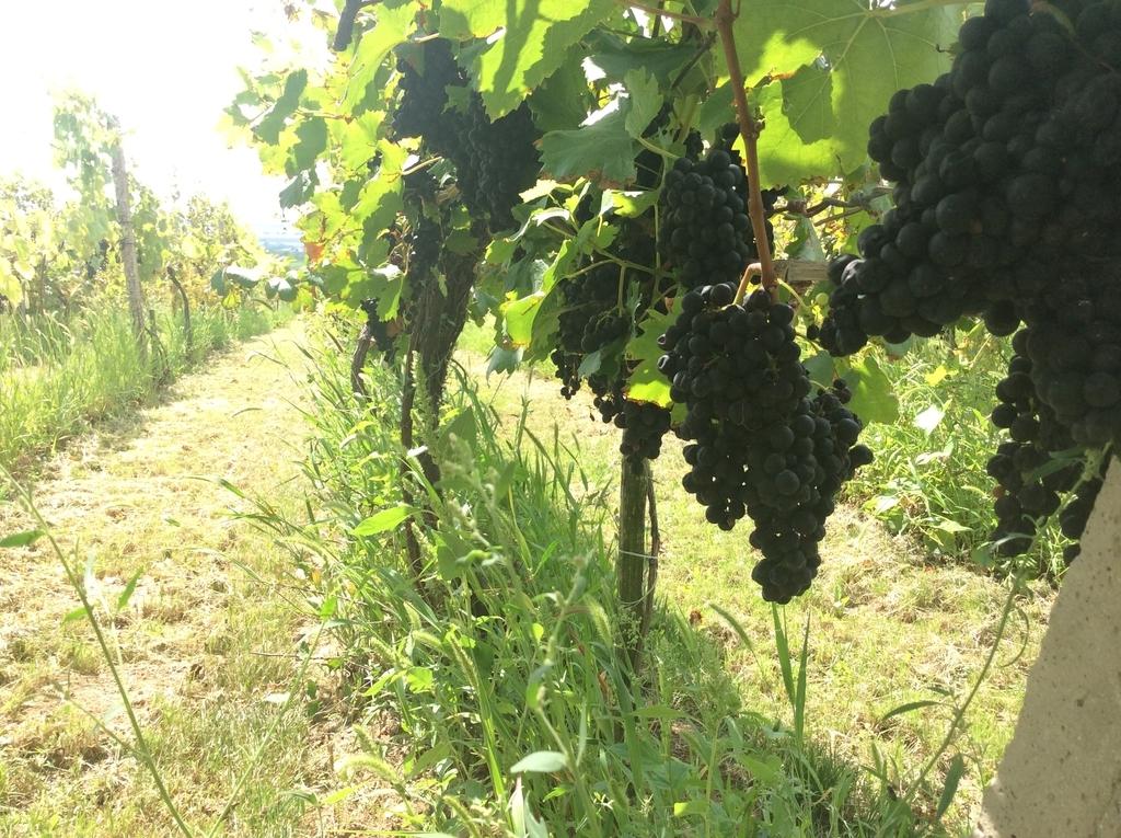 f:id:sheldlake-wine:20181110191247j:plain