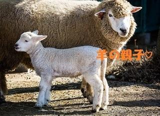 PAK89_kohitujisan20141223113209500.jpg