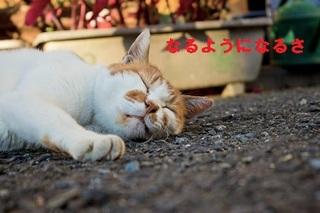 PPU_asufarutodebakusuineko500.jpg