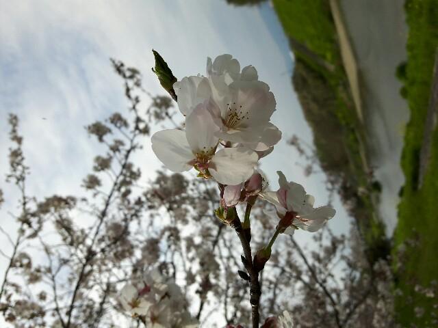 f:id:shi-chan23:20170412215928j:image