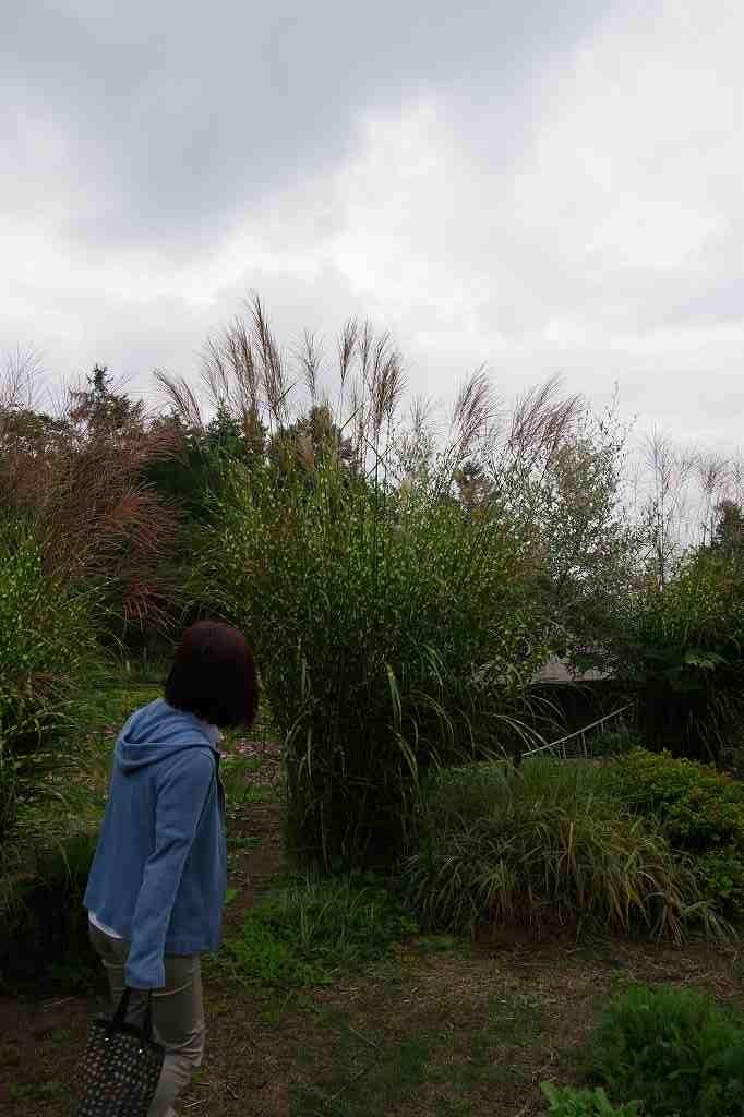f:id:shi-shi-shimane:20170920150559j:plain
